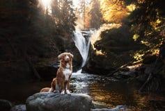 Chien par la cascade Animal familier sur la nature par l'eau Photo libre de droits