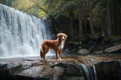 Chien par la cascade Animal familier sur la nature par l'eau Photos stock
