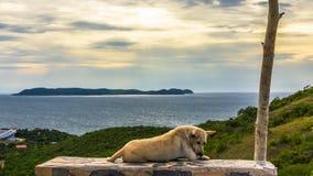 Chien par la mer Photographie stock libre de droits