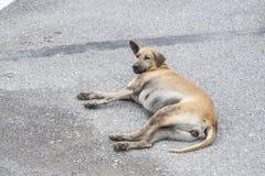 Chien paresseux de manière se trouvant sur la rue Images stock