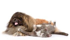 Chien pelucheux de pékinois et chat espiègle ensemble D'isolement sur le blanc Photos stock
