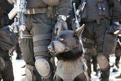 Chien policier Photos stock