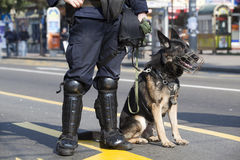 Chien policier Photographie stock