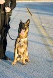 Chien policier Photographie stock libre de droits