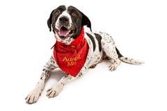 Chien pour l'adoption Photo stock