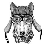 CHIEN pour l'image tirée par la main de conception de T-shirt du casque de port animal de moto pour le T-shirt, tatouage, emblème Photo stock