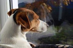 Chien prenant un bain de soleil sur la fenêtre Photographie stock libre de droits