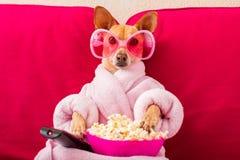 Chien regardant la TV sur le divan images libres de droits