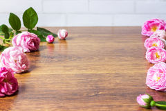 Chien Rose Pink Rosa Canina Flowers Valentine Theme Photo stock