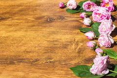 Chien Rose Pink Rosa Canina Flowers Valentine Theme Photos stock