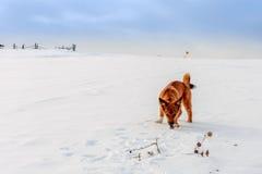 Chien rouge dans la neige Photo stock