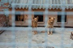 Chien rouge dans une cage Photographie stock