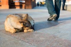 Chien sans abri dans la rue Photographie stock