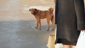 Chien sans abri dans la rue de la ville Le chien égaré marchant la rue et les piétons marchent environ banque de vidéos