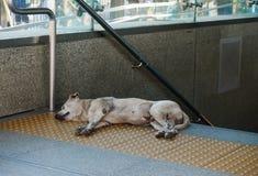 Chien sans abri dormant au sol Photos libres de droits
