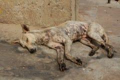Chien sans abri dormant sur le trottoir de la vieille ville Photographie stock libre de droits