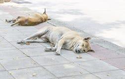 Chien sans abri seul dormant sur le trottoir photo stock