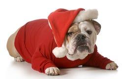 Chien Santa Photos libres de droits