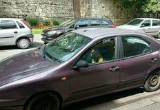 Chien se reposant dans la voiture Image stock