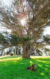 Chien se reposant sous l'arbre Images libres de droits