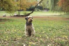 Chien se reposant sur l'herbe Image stock