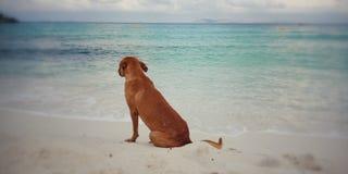 Chien se reposant sur la plage photos stock