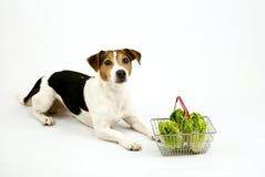 Chien se trouvant avec un panier avec de la salade Photographie stock libre de droits