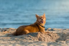 Chien se trouvant sur la plage photo libre de droits