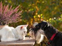 Chien sentant le petit chat blanc Photo stock