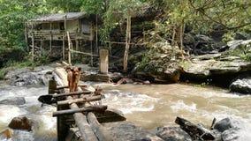 Chien seul en Thaïlande images stock