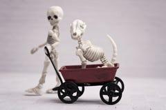 Chien squelettique d'enfant et de squelette Photos libres de droits