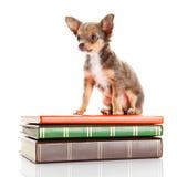 Chien sur des livres Photos libres de droits