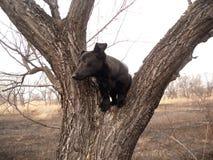 Chien sur l'arbre Photo libre de droits