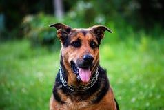 chien sur l'herbe verte pendant l'été photo stock