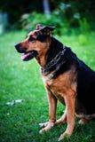 chien sur l'herbe verte pendant l'été image stock