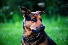 chien sur l'herbe verte pendant l'été photos libres de droits