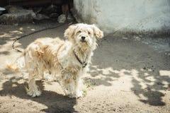 Chien sur la maison gardée par chaîne Le chien protège la maison image libre de droits