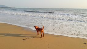 Chien sur la plage photo stock