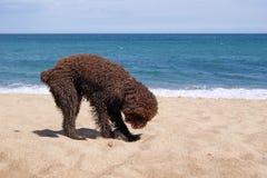 Chien sur la plage Photographie stock