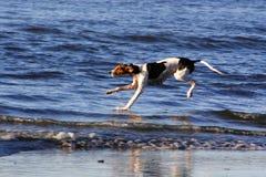 Chien sur la plage Photos libres de droits