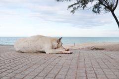 Chien sur la plage Photographie stock libre de droits