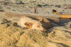 Chien sur la plage Images stock