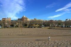 Chien sur la plage de matin Photographie stock libre de droits