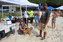 Chien sur la plage pour l'adoption Photo libre de droits