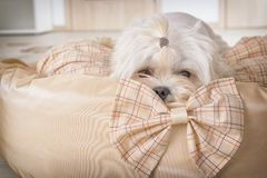 Chien sur le lit de chien Photo libre de droits