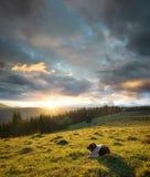 Chien sur le pâturage de montagne pendant le coucher du soleil photographie stock libre de droits