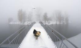 Chien sur le pont Ivano-Frankovsk Photographie stock libre de droits