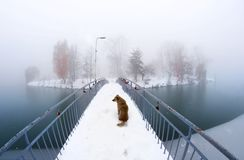 Chien sur le pont Ivano-Frankovsk Photos libres de droits