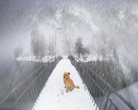 Chien sur le pont Ivano-Frankovsk Photos stock