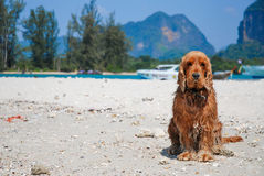 Chien sur le sable. photographie stock